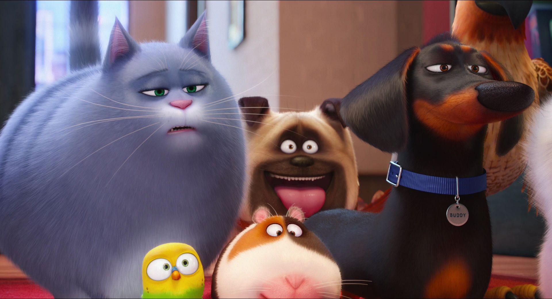 тайная жизнь домашних животных картинки персонажей хлоя