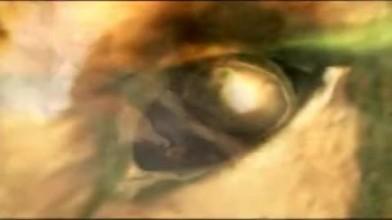 Lionheart Trailer #3