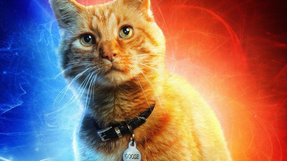 """Из-за атаки на """"Капитана Марвел"""" Rotten Tomatoes потребует подтвердить просмотр фильмов"""