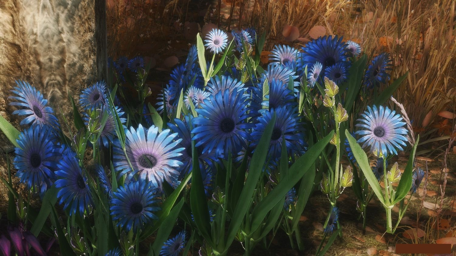 Skyrim Blue Mountain Flower The Most Beautiful Flower 2018