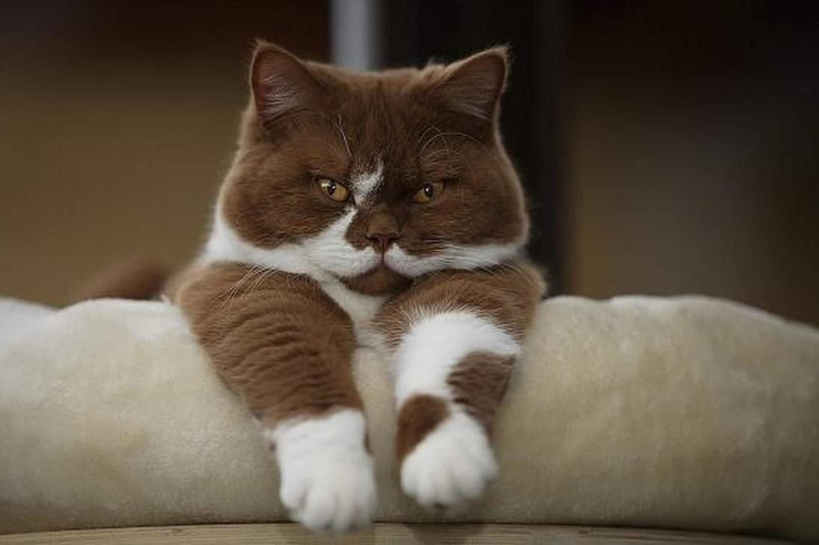 картинки шоколадные кошки одной стороны волны