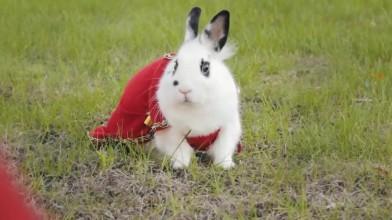 Эпичное приключение кролика