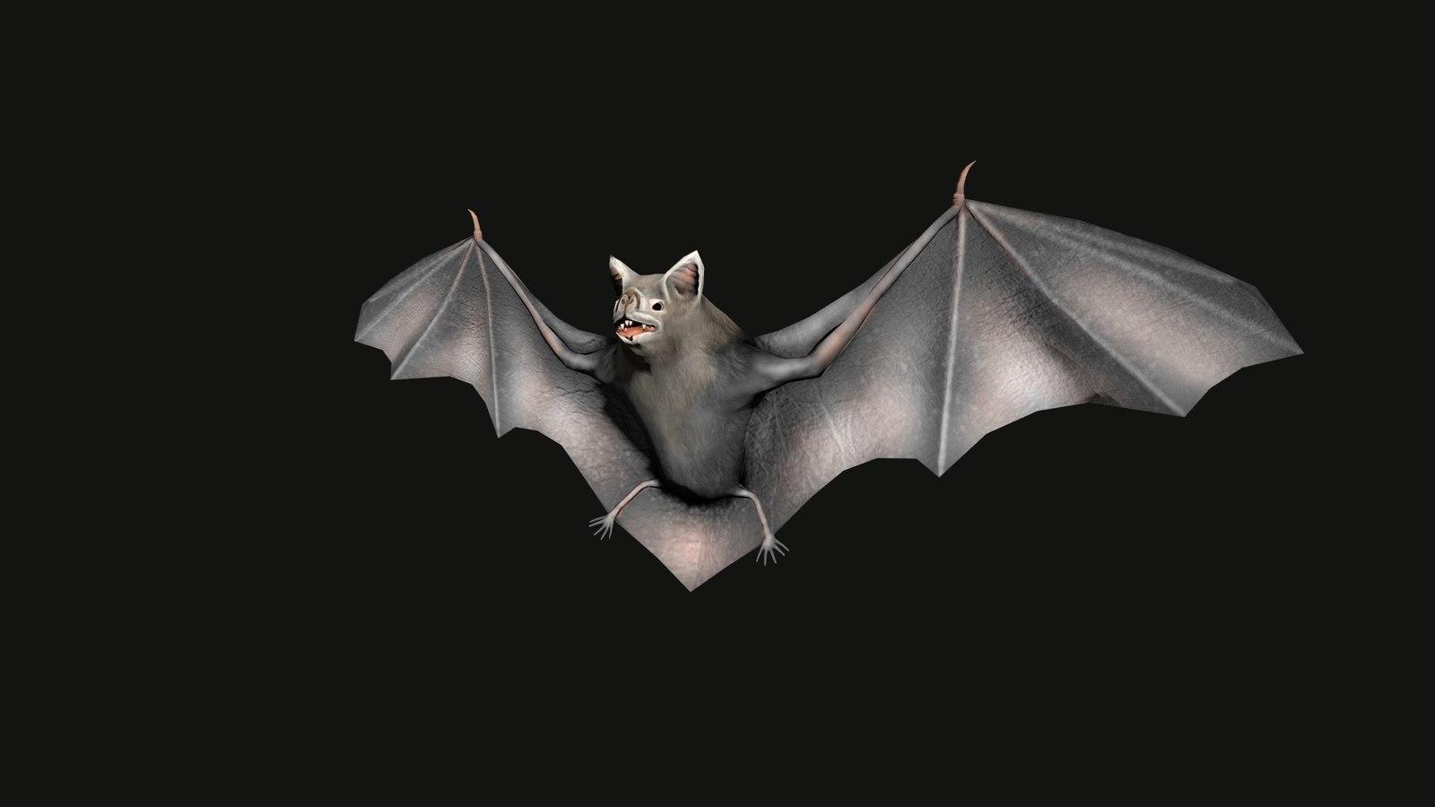 Картинка с грустной летучей мышкой