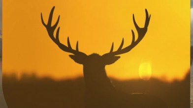 Hunter Call of the Wild - Yukon Valley Трейлер